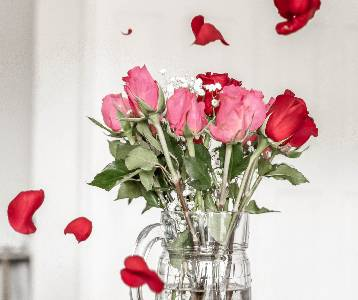 Red and pink roses in a vase with rose petals flying around